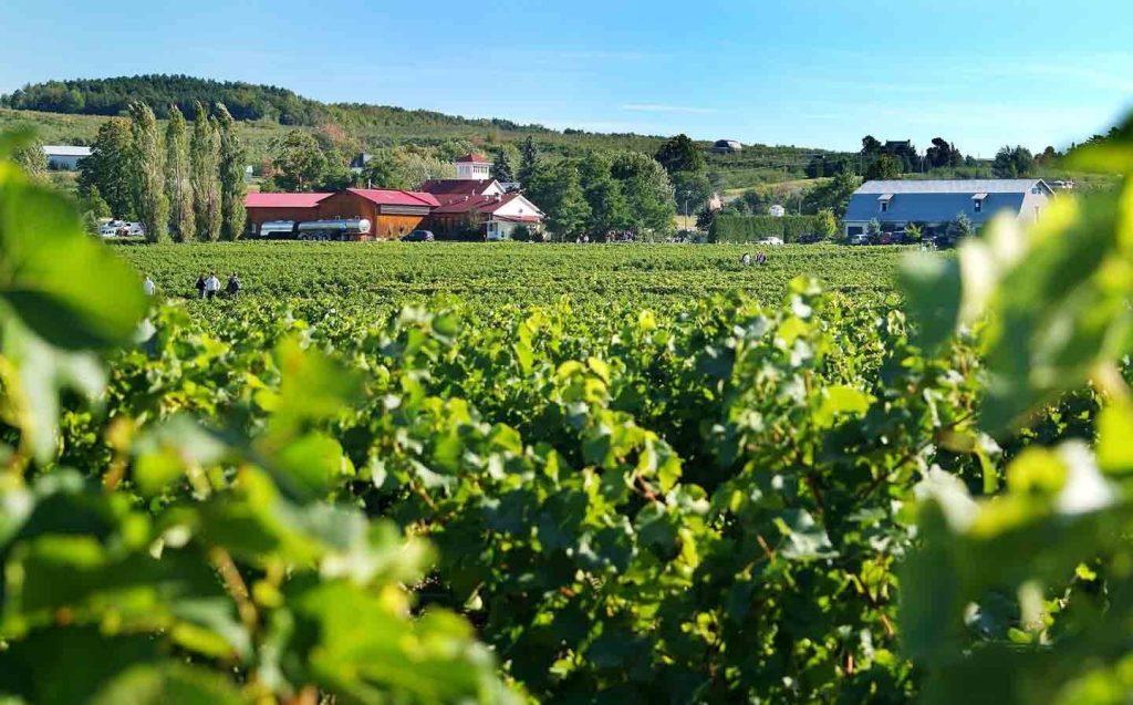 Route des vins de l'Estrie